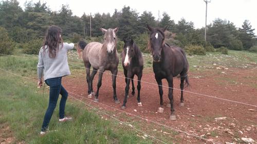 pferde-auf-der-causse